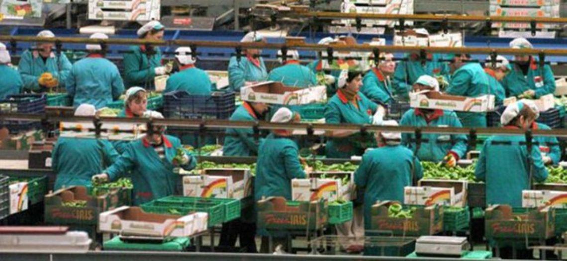 Las nuevas esclavas del s. XXI: las trabajadoras del envasado en Almería